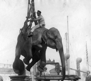 Elephant being unloaded from ship at Hoboken, Sept. 24, 1924